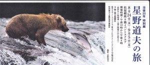 熊と鮭との出会いがしら