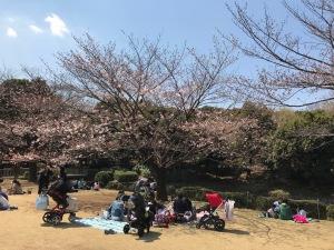 北の丸公園の花見客